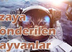 Uzaya Gönderilen Hayvanlar – Canlılar